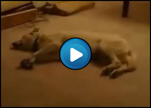Cane che sogna di correre