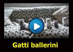 Gatti ballerini