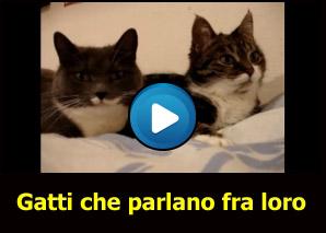 Gatti che parlano fra loro