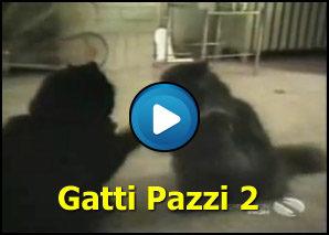 Gatti pazzi 2