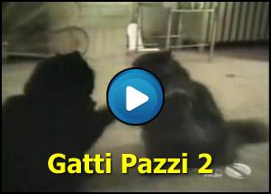 Gatti Pazzi 2 Craniolesoit