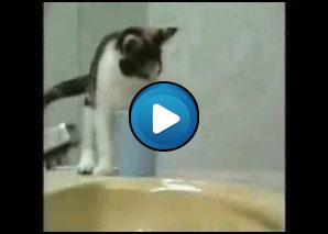 Gatti pazzi