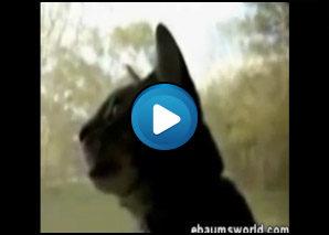 Gatto che abbaia