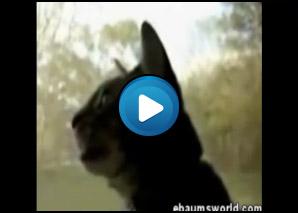 Il gatto che abbaia