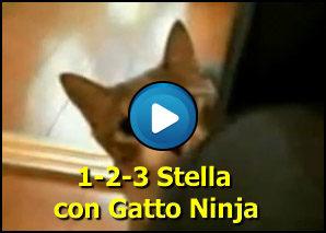 Un due tre stella con gatto ninja