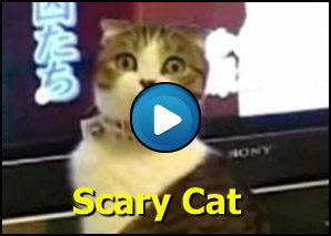 Gatto con sguardo killer