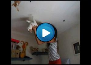 Spidercat il soffitto tu mi imbrat!