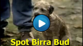 spot birra bud light bad dog