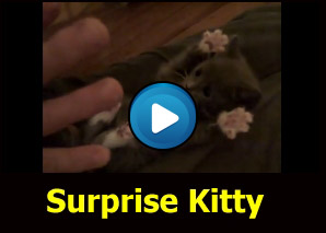 Gatto che fa...Sorpresa!!