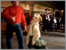 Cane femmina che balla benissimo a ritmo di musica