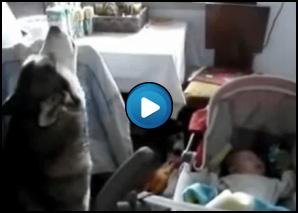 Cane husky che ulula per calmare il neonato