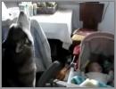 Cane che ulula per calmare il neonato