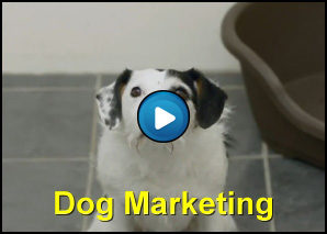 Cane si fa adottare con il Dog Marketing