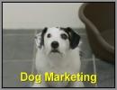 Cane si fa adottare con il Dog Marketing