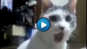 Oh my God Cat