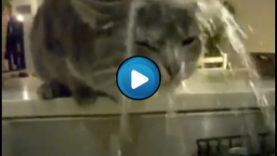 Gatto che canta sotto l'acqua