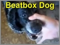 BeatBox Dog