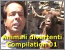 Animali divertenti - Compilation 01