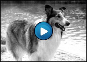 Sigla Lassie