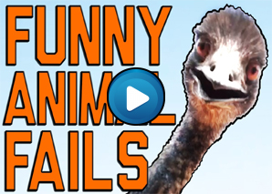 Animali divertenti – Compilation 03