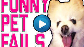 Animali divertenti – Compilation 04