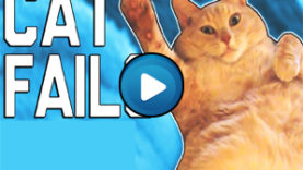 Compilation di fail di gatti