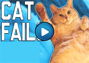 Compilation di fail di gatti