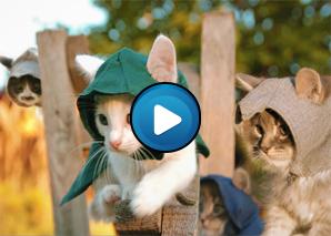 I Gatti di Assassin's Creed