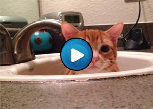 Quando l'erba gatta fa efetto – Compilation di gatti pazzi