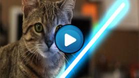 Il gatto Jedi