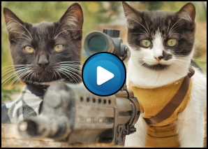 cats vs zombies