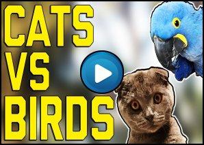 Gatti vs Uccelli