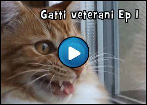 Gatti Veterani Episodio 1: L'inizio