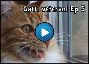Gatti Veterani Episodio 5: La fuga