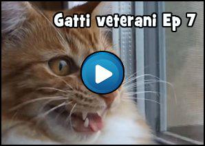 Gatti Veterani Episodio 7: Fottuta Libertà
