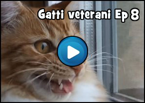 Gatti Veterani Episodio 8: io sono Willy