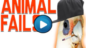 Animali divertenti – Compilation 01