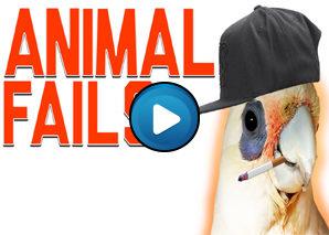 Animali divertenti – Compilation 01
